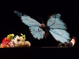 papillon-vol